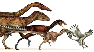 Massive meat-eating dinosaurs evolved into agile flying birds, according to new research.