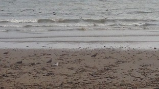 Seagulls are an increasing nuisance, according to councillors and traders