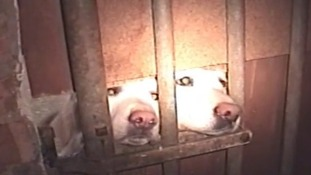 A Norfolk dog breeder has been given a six month sentence for fraud
