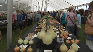 15,000 people attend Taunton Flower Show