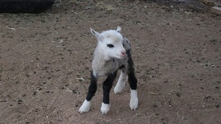 Facebook/My Petting Zoo