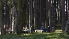 Elveden Forest in Suffolk.