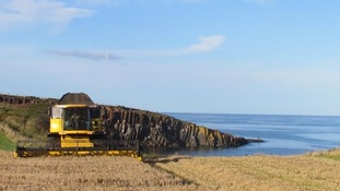 field, sea and tractor harvesting by the sea
