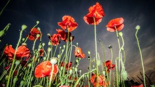 It is 100 years since Britain joined WWI.