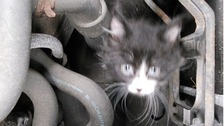 The tiny kitten was discovered inside a car's engine in Macclesfield.