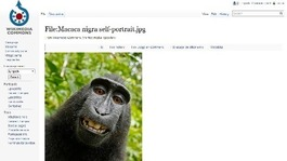 Monkey 'selfie' sparks copyright row