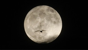 A bird a bird flies past a supermoon in Edinburgh.
