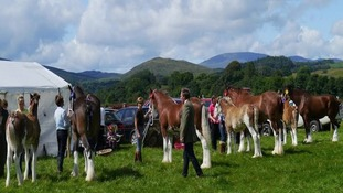 Horses being judged at Glenkens Agricultural Show