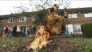 Fallen tree damages house