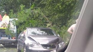 Tree falls in Llangollen