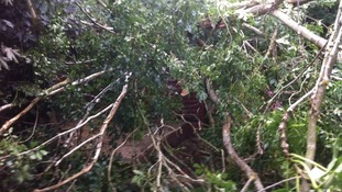 Tree falls in Pencoed