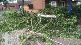 Fallen trees still line the streets where 'mini tornado' hit