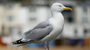 In Camden, a seagull was reported killed during a burglary.