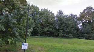 Trees near Barney Close