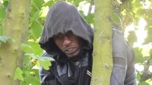 Suspected burglar attempts to evade police by staying in tree