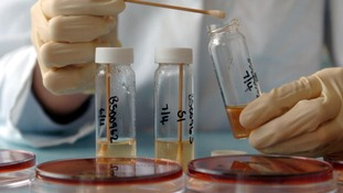 A Salmonella sample is tested.