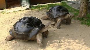Tortoises separate