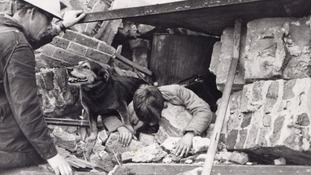 Scruffy stray terrier Rip was adopted by Mr E King, an Air Raid Precaution Warden (A.R.P.) on duty in Poplar, East London