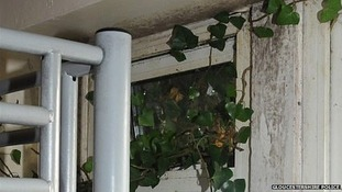 Ivy coming through window