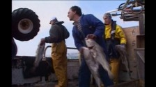 discarding fish
