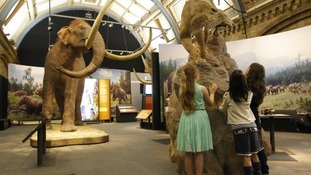 Visitors enjoying learning about mammoths at the Natural History Museum