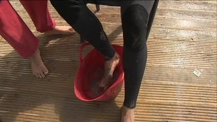 Weaver Fish are causing problems for surfers