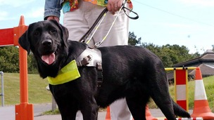 The charity says guide dogs in London are at  risk from dangerous cyclists.