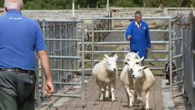 P-LOVELAMB_ITV_Border