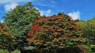 green trees showing first autumn tinges of colour