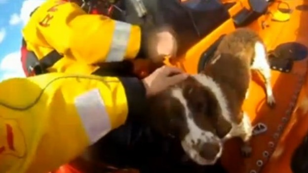 G-DOG_RESCUE_video_Westcountry