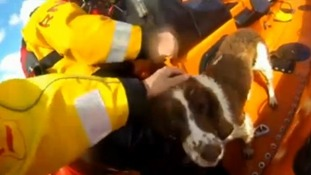 Somerset dog survives falling nearly 1000 feet