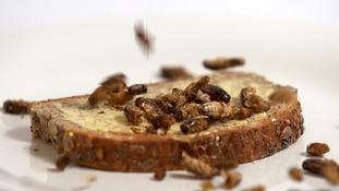 bugs on toast