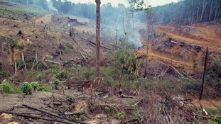 Severe deforestation is one of the issues affecting wildlife.