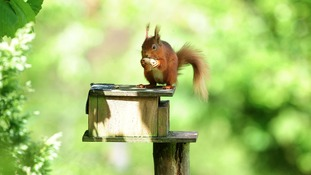 Squirrel feeders should be kept clean to prevent the spread of disease