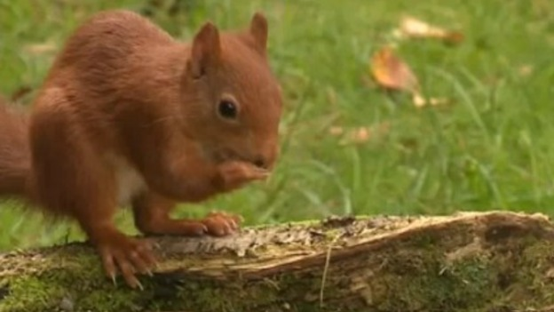 P-SQUIRRELS_ITV_Border