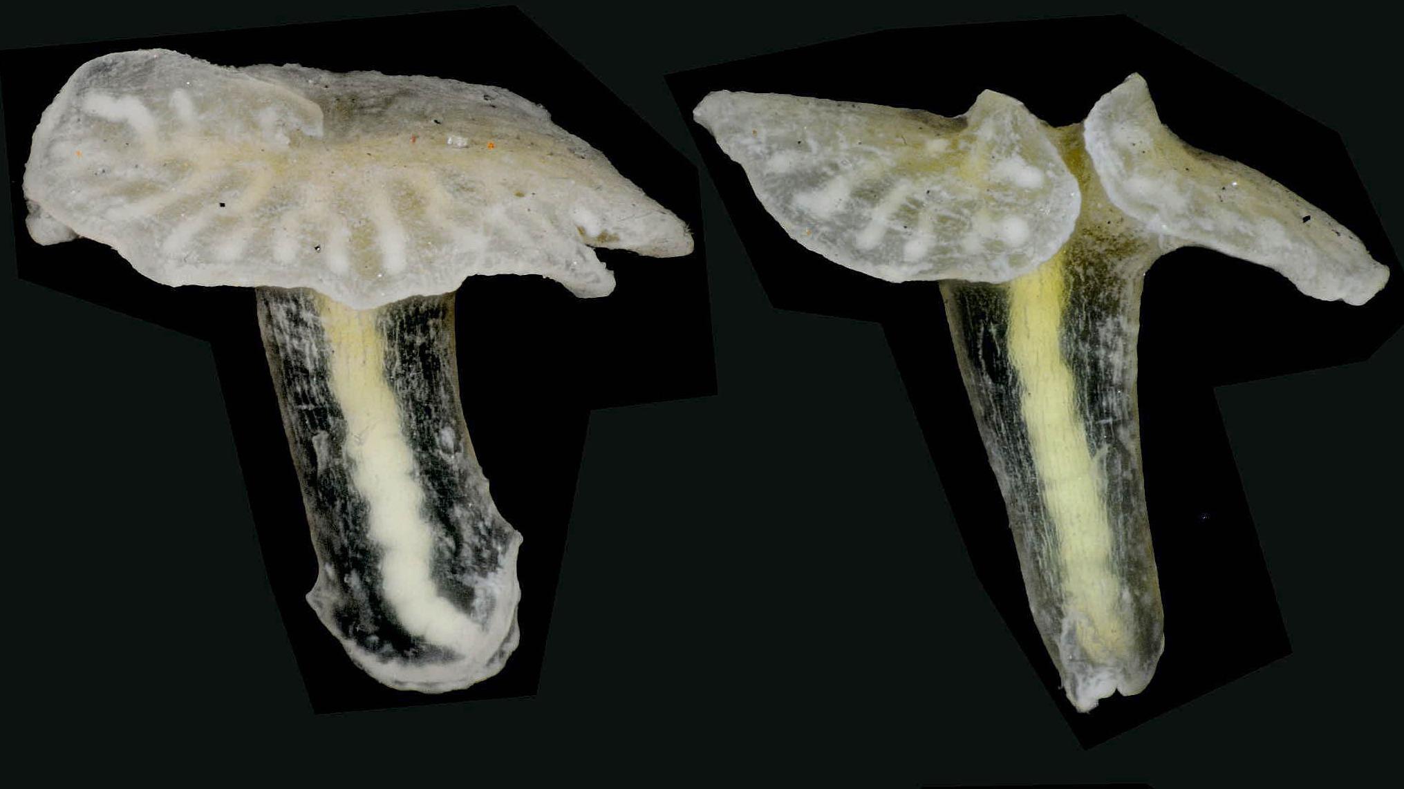National Business Group On Health >> 'Alien mushroom creatures' found off Australian coast - ITV News