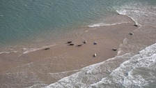 An aerial view of seals in the Thames Estuary.