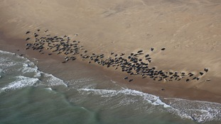 Almost a thousand seals are believed to live by the Thames.