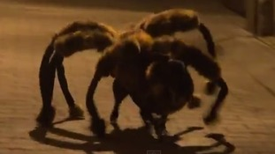 'DogSpider' emerges from the darkness