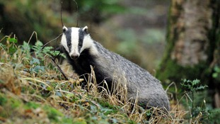 Farming minister outlines plans for culls