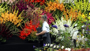 Preparations under way for the Harrogate Autumn Flower Show