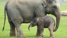 New baby elephant