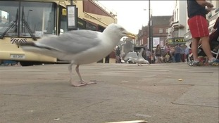 Seagulls cause chaos in Scarborough