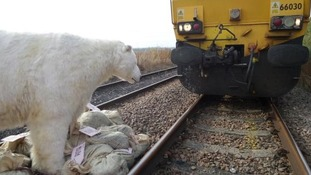 Greenpeace activists have used a life-size polar bear puppet to stop a Nottinghamshire coal train in its tracks
