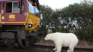 A life-size polar bear puppet was used to stop the train from moving.