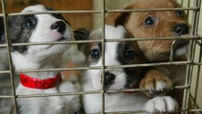 Abandoned puppies in a cage