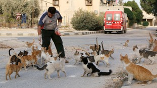 Cats flocks to be fed by Alaa