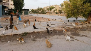 Cats wait for Alaa in Aleppo