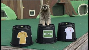 Rocky the Raccoon predicts England to draw