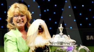 The 7 year old dog beat off competition from six other finalists, including a Pomeranian and an Old English Sheepdog